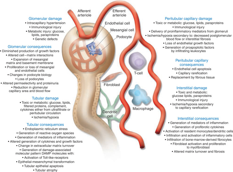Overview Of Factors Contributing To The Pathophysiology Of