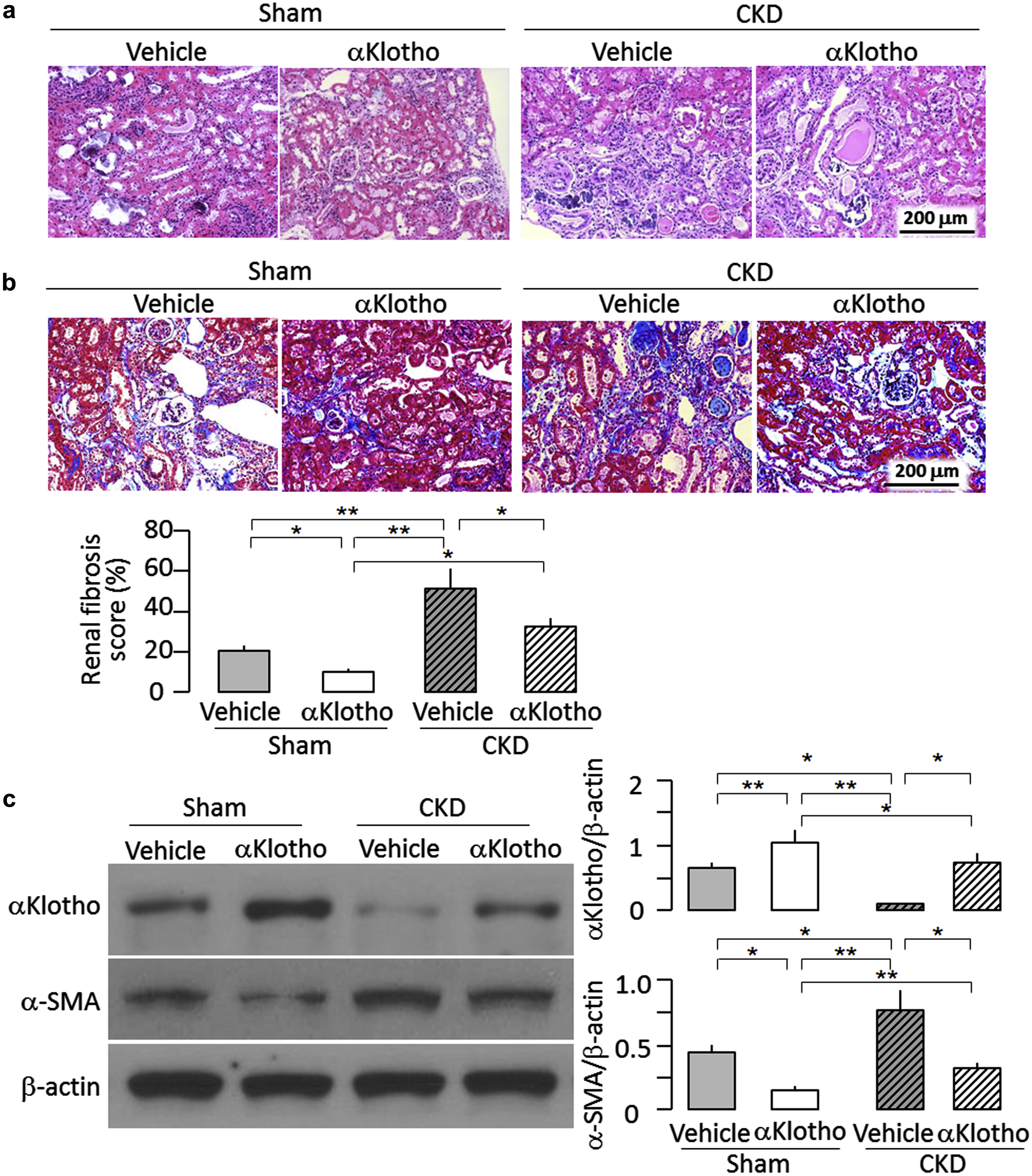 Recombinant α-Klotho may be prophylactic and therapeutic ...