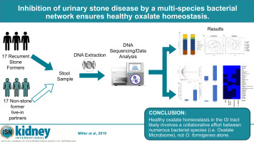 Inhibition of urinary stone disease by a multi-species