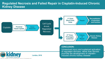 Regulated necrosis and failed repair in cisplatin-induced chronic
